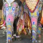 Jaïpur, Holi et éléphants roses