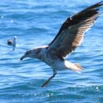 Tour d'horizon des oiseaux néo-zélandais en images