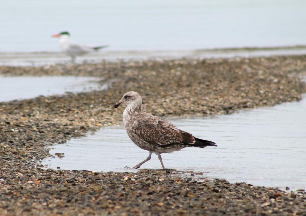 Bien vu le plumage camouflage de plage!