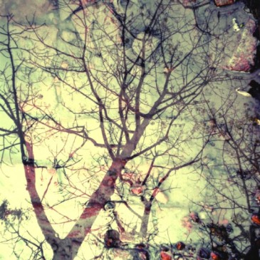 photo-diaries #1 : mirror puddles