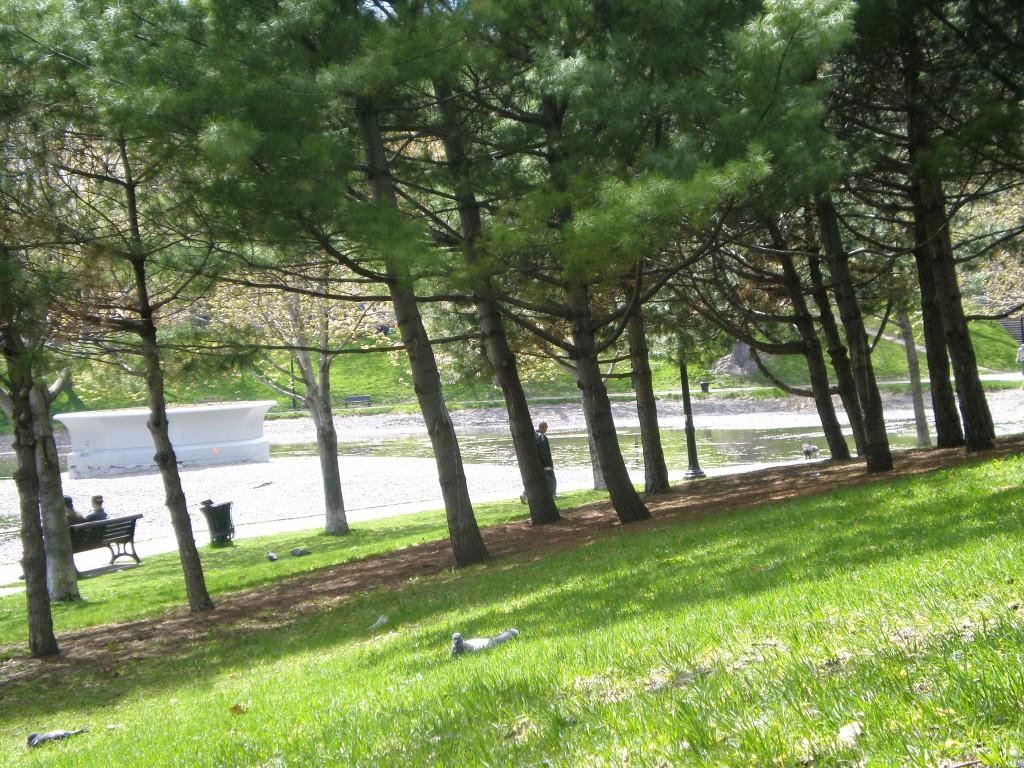 Le parc Lafontaine...A côté de notre set-up, deux guitaristes jouaient du Django Reinhard. Les pigeons mâle coursaient les femelles au bord du lac (c'est le printemps...). La musique en live donnait à leur manège de séduction un air franchement comique.
